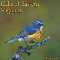 Calls Of Eastern Vagrants