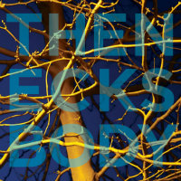 THE NECKS: Body